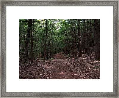 Path In The Woods Framed Print by Catherine Gagne