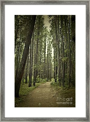 Path In The Woods Framed Print by Ivy Ho