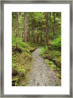 Path Inside Tongass National Forest Framed Print