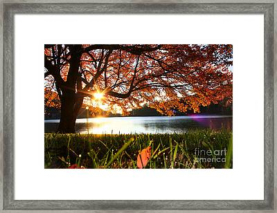 Path Into Autumn Framed Print by Everett Houser