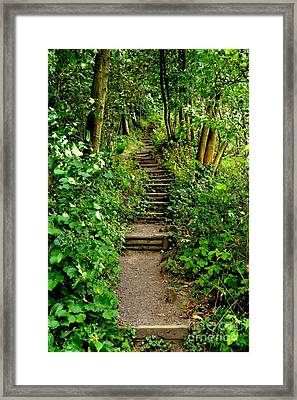 Path Into The Forest Framed Print