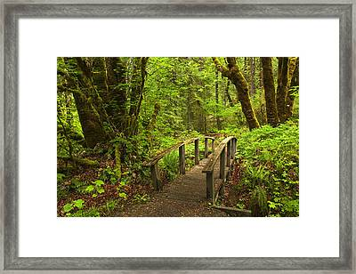 Path Into The Woods Framed Print by Andrew Soundarajan