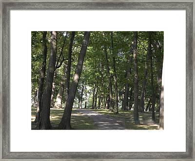 Path Into Woods Framed Print by Cim Paddock