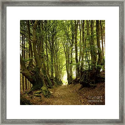 Path Lined Whit Old Beeches. Allier. Auvergne. France Framed Print by Bernard Jaubert