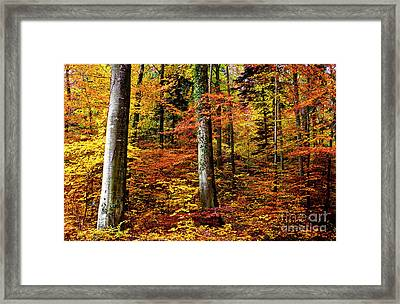 Framed Print featuring the photograph Path Of Autumn 1 by Charles Lupica
