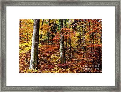 Path Of Autumn 1 Framed Print