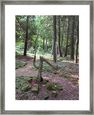 Path Of Choice Framed Print
