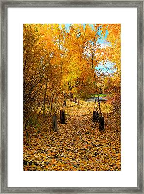 Framed Print featuring the photograph Path Of Fall Foliage by Kevin Bone