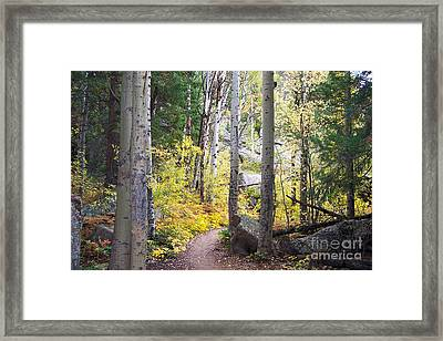 Framed Print featuring the digital art Path Of Peace by Margie Chapman