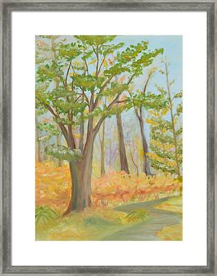 Path Of Trees Framed Print
