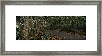 Path Passing Through A Forest, Maui Framed Print by Panoramic Images