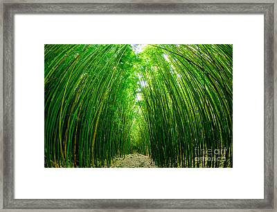 Path Through A Bamboo Forrest On Maui Hawaii Usa Framed Print
