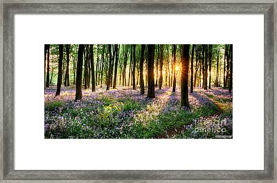Sunrise Path Through Bluebell Woods Framed Print by Simon Bratt Photography LRPS