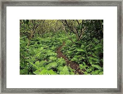 Path Through Jozani Np Zanzibar Tanzania Framed Print by Thomas Marent