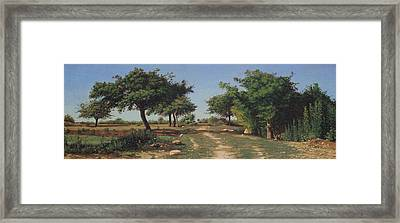 Path Through The Apples Trees Framed Print