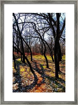 Path Thru The Oaks Framed Print by David Taylor