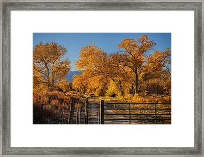 Path To Autumn Framed Print by Andrew Soundarajan
