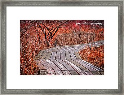 Path To Nature Framed Print by Frank Sciberras