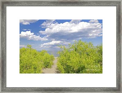 Path To Secret Beach Framed Print