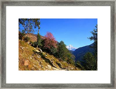 Path To The Mountains Framed Print