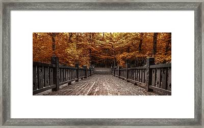 Path To The Wild Wood Framed Print