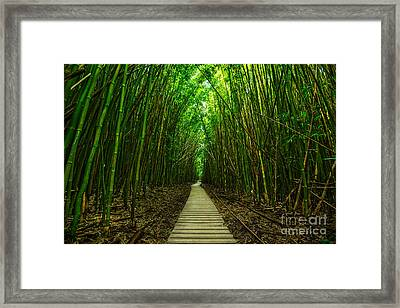 Path To Zen Framed Print by Jamie Pham