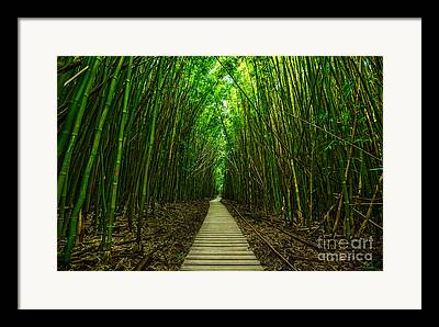 Bamboo Forest Framed Prints