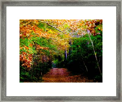 Paths We Choose Framed Print by Karen Wiles