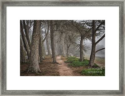 Pathway Framed Print by Alice Cahill