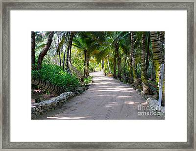 Pathway Framed Print by Carey Chen