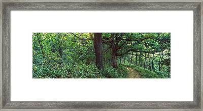 Pathway In A Forest, Mississippi River Framed Print by Panoramic Images