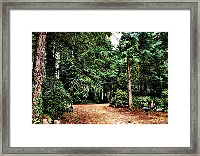 Pathway In The Forest Framed Print by Rafael Escalios