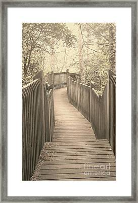 Pathway Framed Print by Melissa Petrey