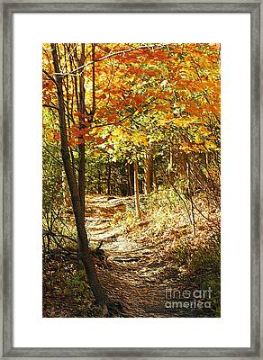 Pathway Through The Woods Framed Print by Kathleen Struckle