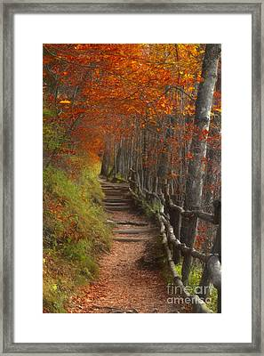 Pathway To Autumn Framed Print by Benanne Stiens