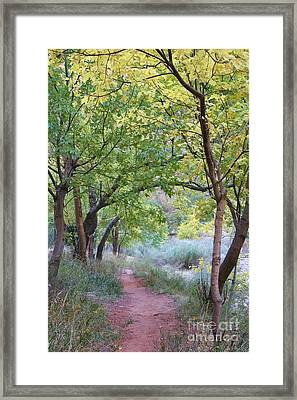 Pathway To Heaven Framed Print by Mary Lou Chmura