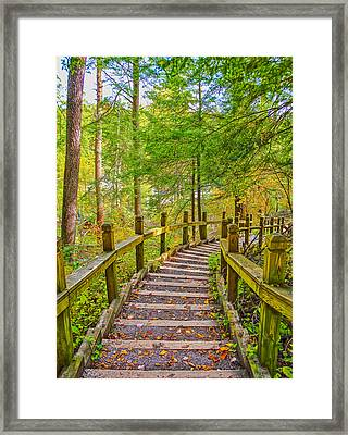 Pathway To The Falls  Framed Print by SCB Captures