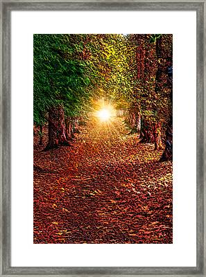 Pathway To The Heart Framed Print