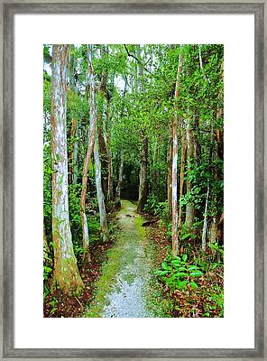 Pathway To The Rainforest Framed Print by Kicking Bear  Productions