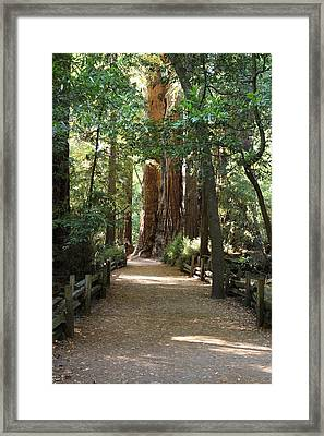 Pathways Framed Print
