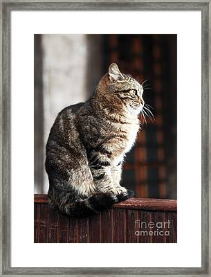 Patience At The Mosque Framed Print by John Rizzuto
