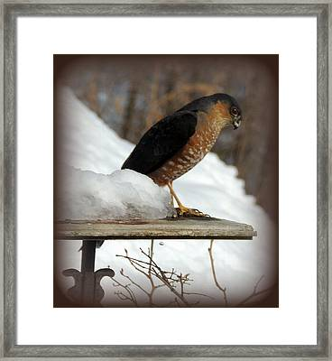 Patience Framed Print by Mim White