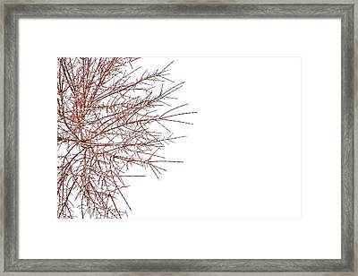 Patience Months Framed Print by Mark  Ross