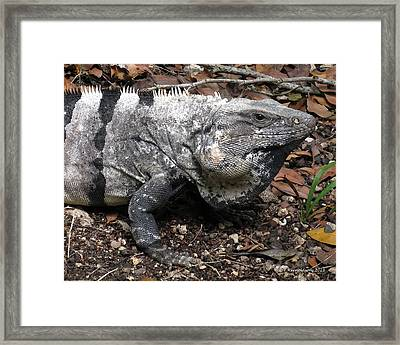 Patience Framed Print by Terry Reynoldson