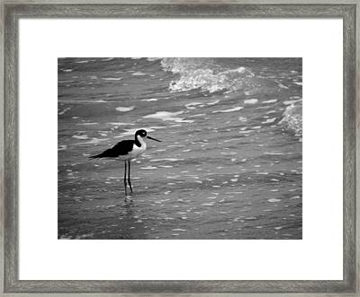 Framed Print featuring the photograph Patience by Tom DiFrancesca