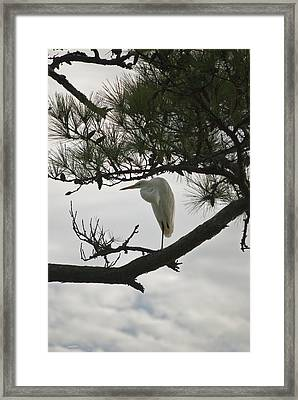 Patience Wil 358 Framed Print by G L Sarti