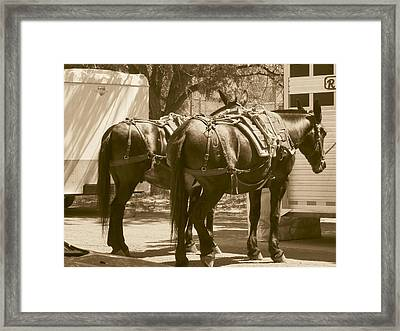 Patient Pack Mules Framed Print