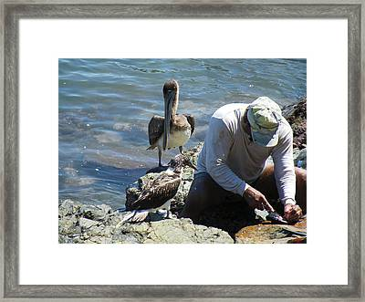 Framed Print featuring the photograph Patient Pelicano  by Brian Boyle