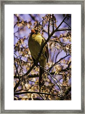 Patiently Waiting Framed Print by Barry Jones
