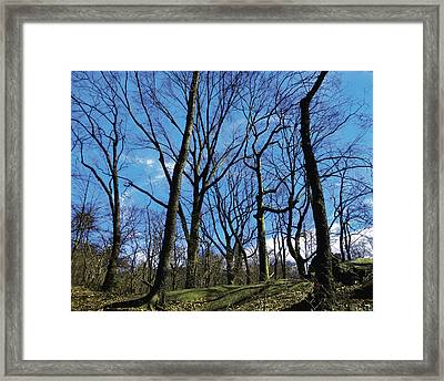 Patiently Waiting For Spring Framed Print